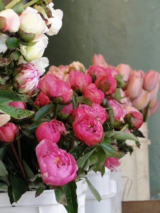 Peonies by West of Whimsy