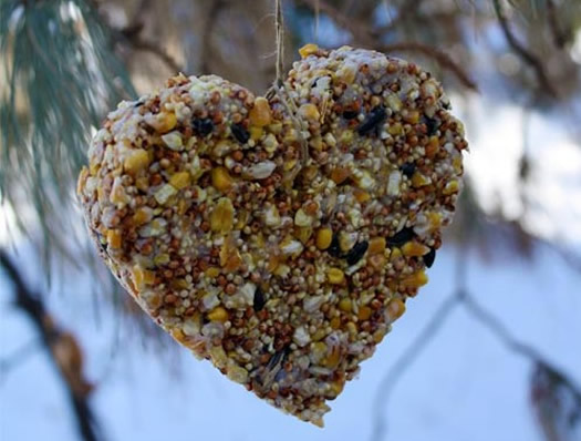 Homemade-Heart-Birdfeeder by Alphamom