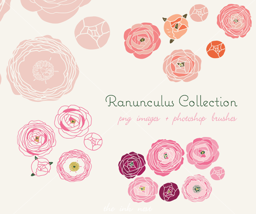 Ranunculus Collection by the Ink Nest
